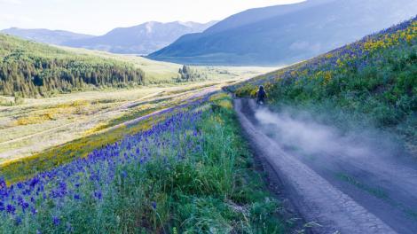 Fleurs colorées le long d'un chemin de terre dans la vallée de Gunnison, près de Crested Butte