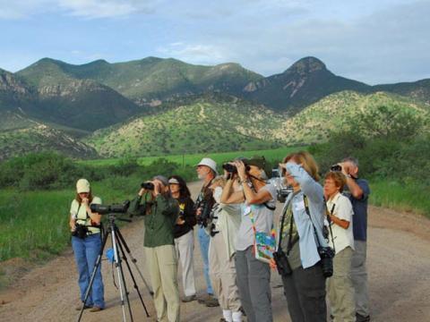Observation des oiseaux lors du Southeast Arizona Bird Festival à Tucson