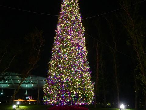 Le sapin de Noël illuminé au Town Center Park