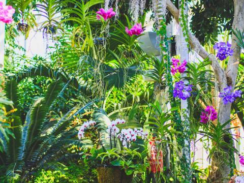 Orchidées en fleurs dans la serre Nicholas Conservatory