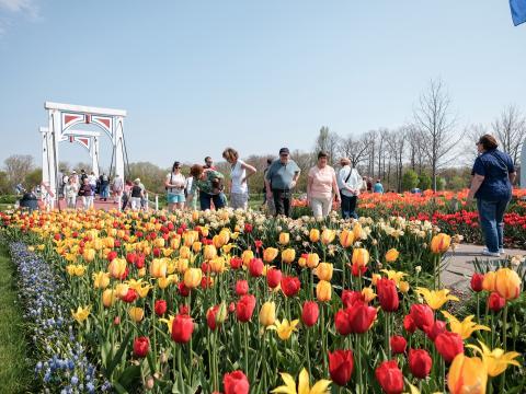 Un chemin bordé de tulipes en fleurs lors du festival Tulip Time