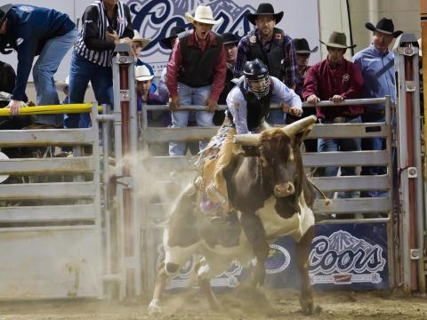 Participant au rodéo de l'association Professional Bull Riders de Billings