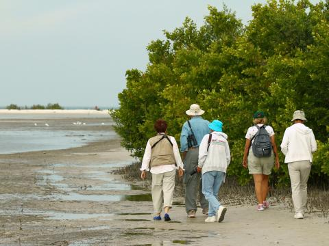 Birders exploring Rookery Bay during the Southwest Florida Festival of Birds