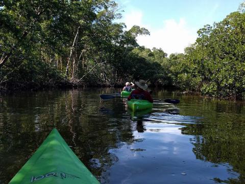 Kayak au refuge faunique national J.N. «Ding» Darling National sur l'île de Sanibel, en Floride