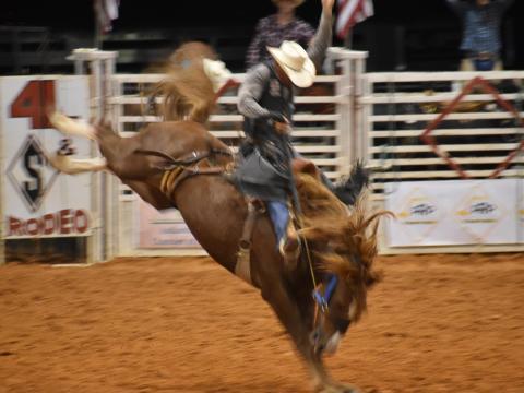 Compétition au Indiantown Rodeo en Floride