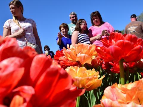 Visiteurs admirant les fleurs colorées de l'Albany Tulip Festival